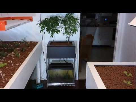 Indoor Aquaponic Garden #2(Worm Bin)