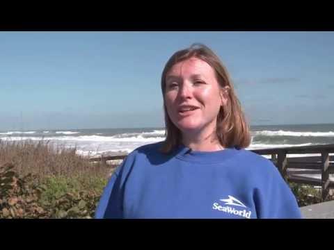 SeaWorld Orlando Animal Rescue Team Returns 11 Sea Turtles