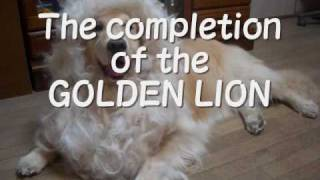 How to make GOLDEN LION