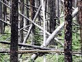 Sasquatch Wilderness Beautiful Structures with Dan