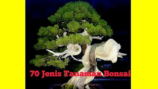 Jenis-jenis tanaman bonsai (lebih dari 70 jenis tanaman yang bisa di bonsai)