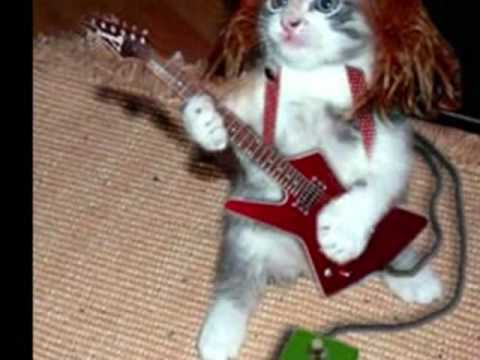 They Want To Break Free.  Cat Video.xx video