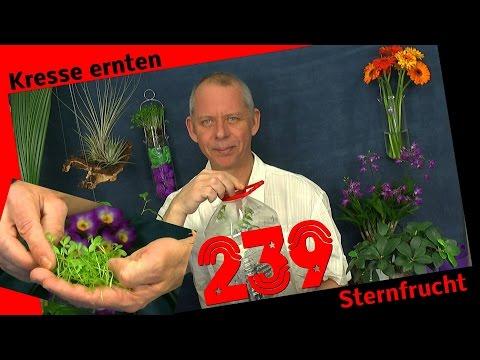 Die Sämlinge und wie geht es weiter mit den Exoten und anderen Pflanzen Teil 239