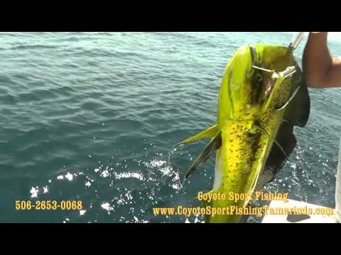 Coyote Sport Fishing Tamarindo Costa Rica