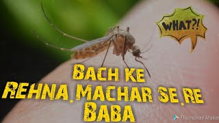 Top Amazing Mosquito Facts. by Apni Science