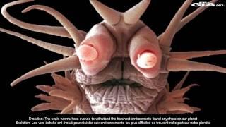 Alien Monsters of the deep, Feb 20, 2012.mp4