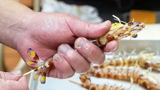 Japanese Street Food - LIVE SHRIMP & BLACK GARLIC SQUID Okinawa Seafood Japan