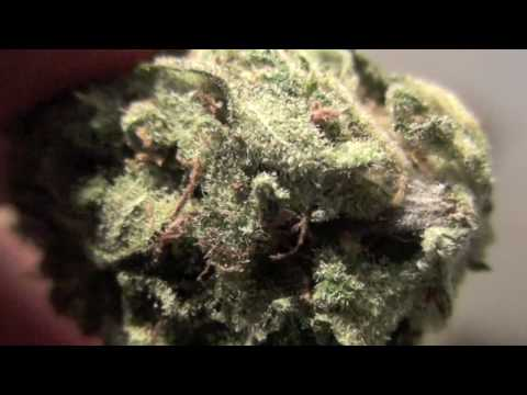 Orange Kush - Great Close Ups ! TOP 10 STRAINS