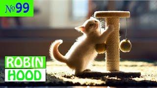 ПРИКОЛЫ 2017 с животными. Смешные Коты, Собаки, Попугаи // Funny Dogs Cats Compilation. Май №99