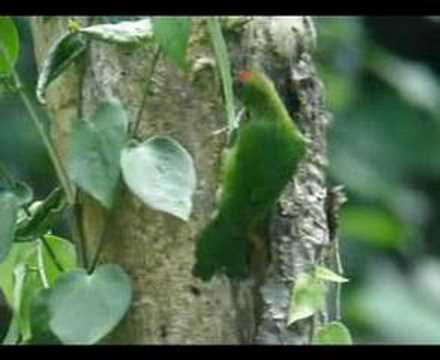 Barbet Video