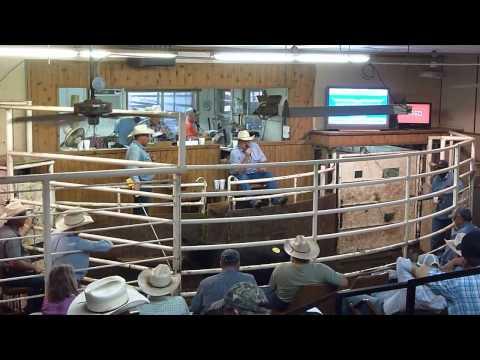 Livestock Auction Seguin/TX