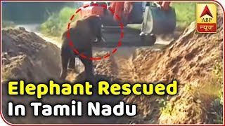 Viral Desh: Calf Rescued From A Pit After Six Hours | ABP News