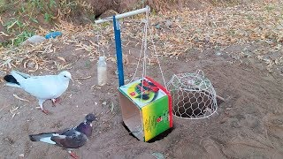 Amazing Bird Catching Technique (Bird Trap) with Pipes, Carton and Basket