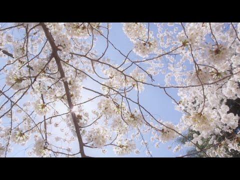 Romantic Relaxing Music: Stress Relief, Meditation, Study, Sleep, Beautiful Piano Instrumental ★58