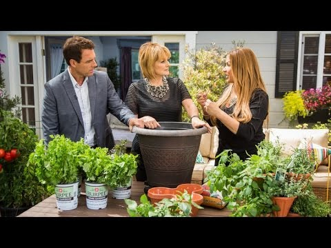 Home & Family - How to Grow Vegetables on your Patio