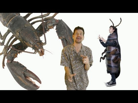 """""""Baby, You're an Arthropod!"""" Song about insects, crustaceans, arachnids & more by Lucas Miller"""