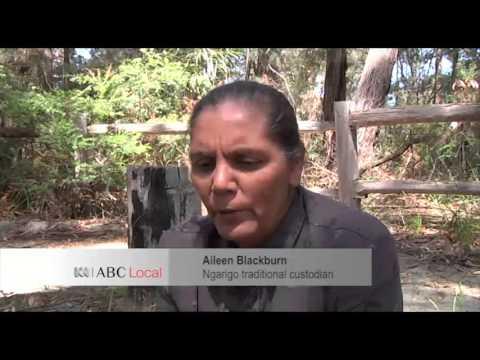 Monaro dieback brings science and Aboriginal knowledge together   ABC News Australian Broadcasting C