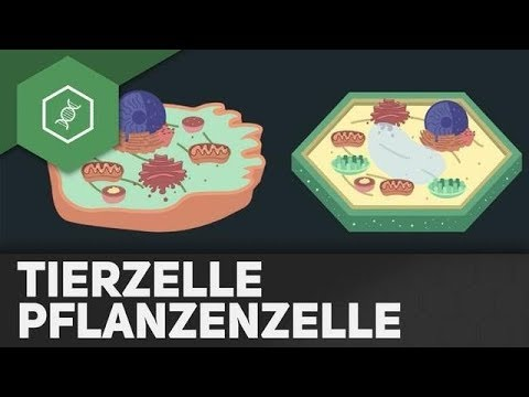 Unterschied pflanzenzelle tierzelle