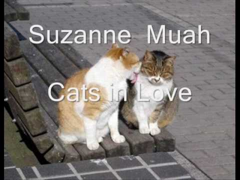 Suzanne-muah Lirik lagu dan Video klip (cats in love).wmv