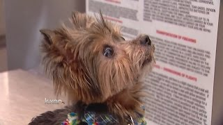 Dog missing for 6 years reunited with Austin owner