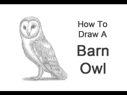 Baby Barn Owl Drawings How to Draw a Barn Owl