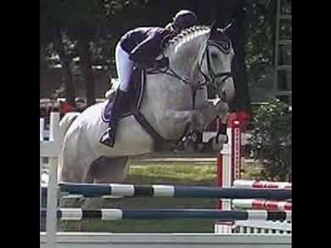 www.sporthorses-online.com 2008 top amateur jumper gelding