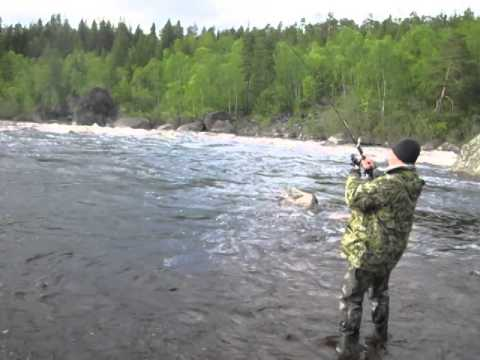 рыбалка в мурманске кумжу форель