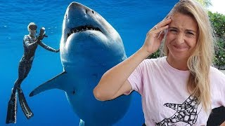 Should Ocean Ramsey have touched the Great White Shark?