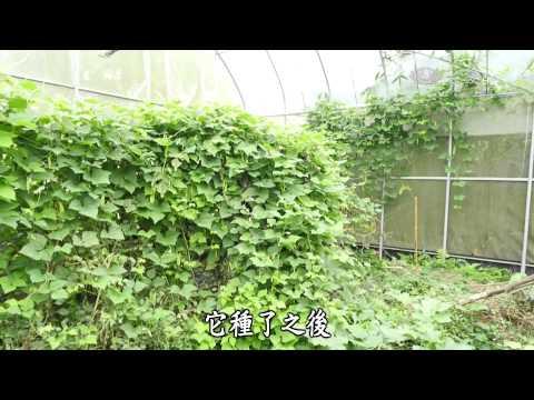 台灣-蔬果生活誌-20150329 低血壓蔬食保健法