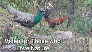 Beautiful Peacock Found At His Farm House | My Travel Diaries 2018 | Nature Lovers | Neelu arts