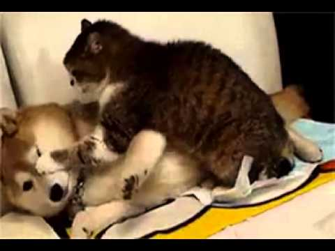 Polah Binatang Peliharaan Lucu (gif) video