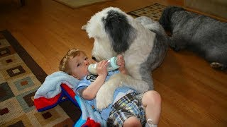Nanny Dogs🐶👶Cute Dogs as Babysitter (Part 1) [Epic Life]