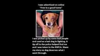 Britain First Properly Uses Whites' Dog Love To Feelingly Demo Our Commonality & Fund White Survival
