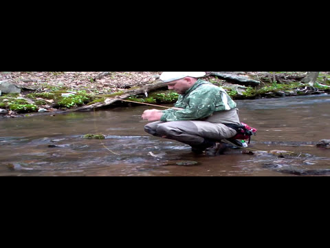 Wild Trout Fishing in Pennsylvania Brookies and Browns