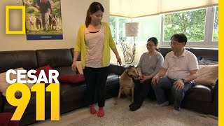 Calm and Assertive in Hong Kong | Cesar 911