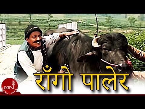 """राँगो पालेर"" New Nepali Comedy Song  by Kedar Ghimire ""माग्ने बुडा"", Suntali ""सुन्तली"" & Bandre"