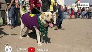Fashion show of dogs | Dog show 2018 | Puppies | German shepherd  | Bulldog