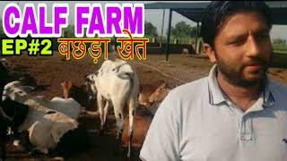 calf farming /बछड़ा खेत  information EP#2