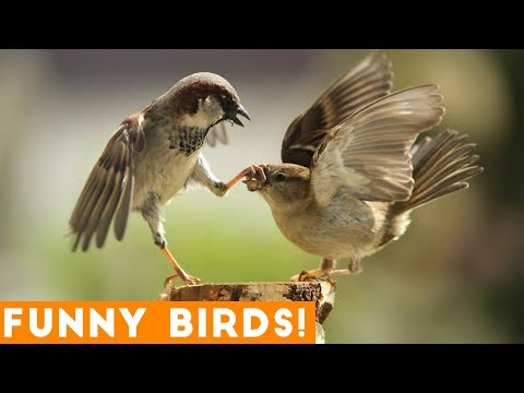Funny Parrot & Bird Videos Weekly Compilation 2018 | Funny Pet Videos