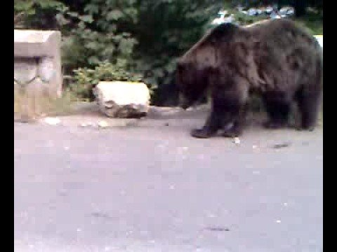 ursul la cota 1400(b31uzzi)