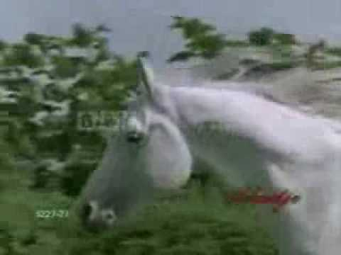 horses - I am women