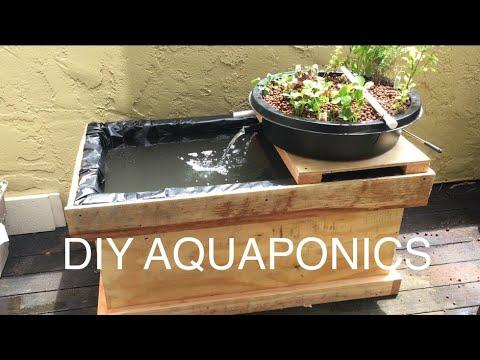 DIY Aquaponics!