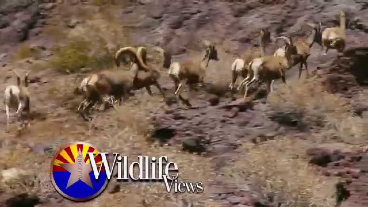 Arizona wildlife views october 26th show promo youtube for Az game and fish license