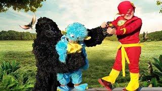 THIS GORILLA TRIED TO TAKE MY SISTER! The Flash vs Gorilla    Jai Bista Show
