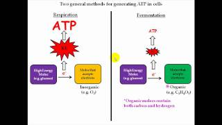 Cellular Respiration Part 1
