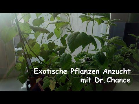 Das ist aus meinen Pflanzen geworden - Exotische Pflanzen Anzucht