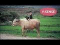 Vietnamese Award Winning Movie   Buffalo Boy | English Subtitles