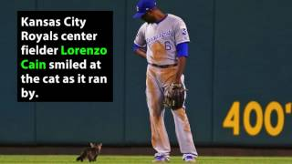 Feisty Cat Crashes Cardinals,  Royals MLB Game