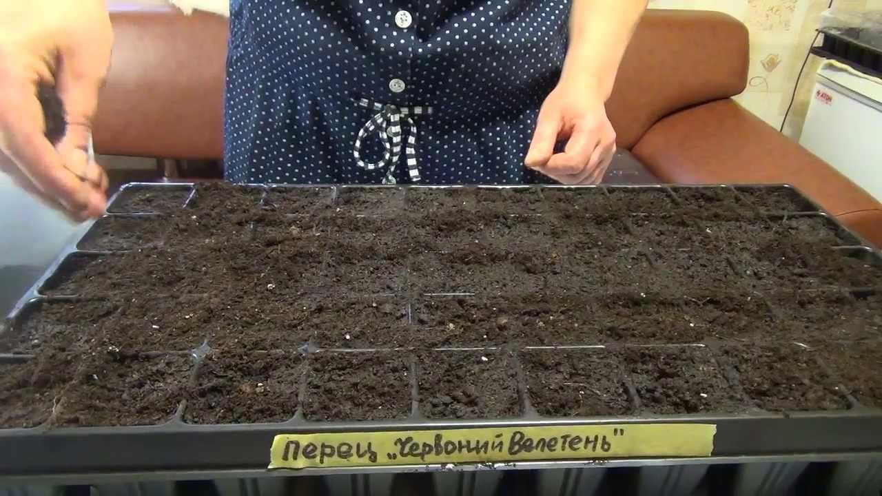 Как посадить правильно семена перца на рассаду 37