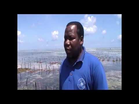 Farm Africa's Seaweed farming project in Zanzibar, Tanzania